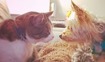 Sam's dog and cat cropped.jpg