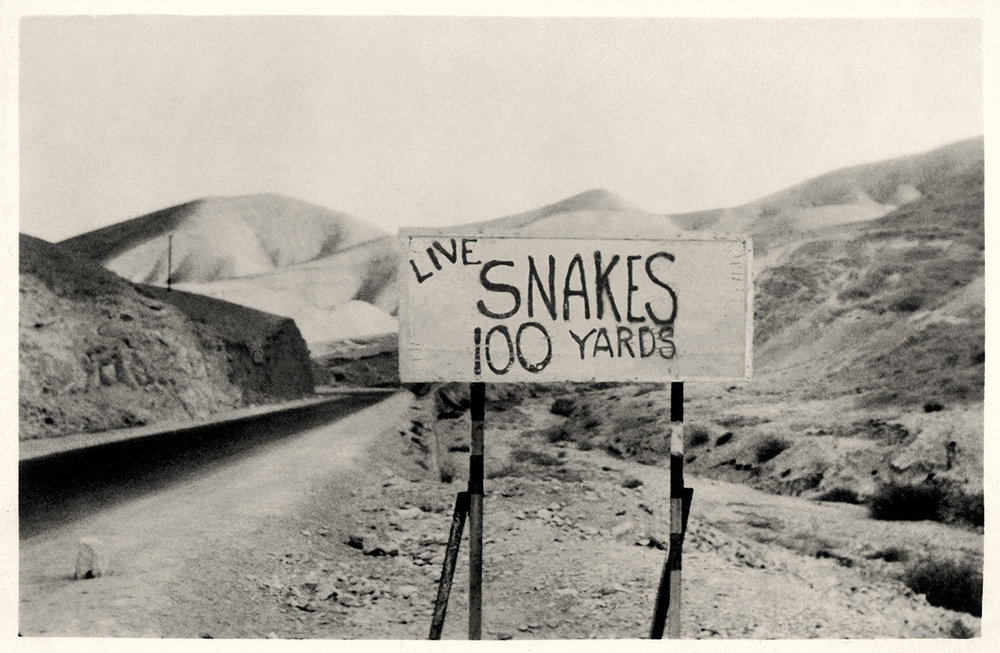 Live Snakes
