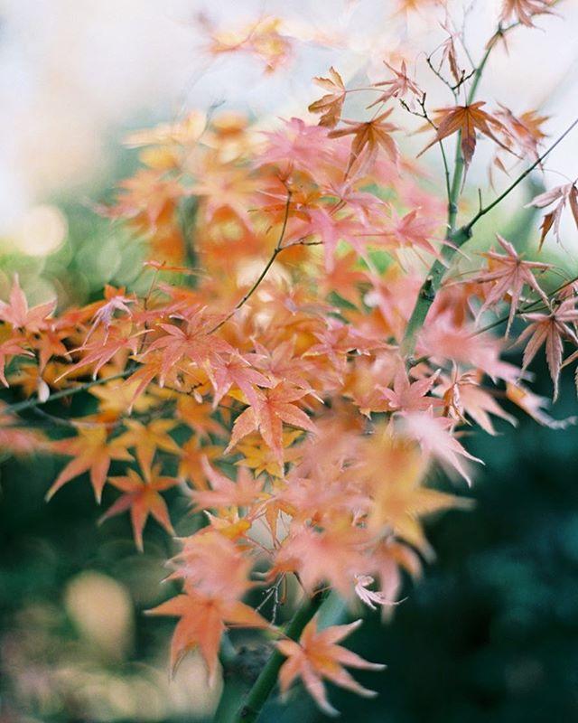 Fall hues.