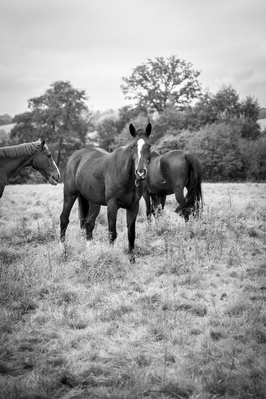 HORSE - KENT.jpg