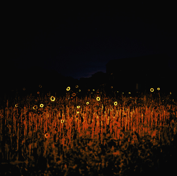 nightflowers