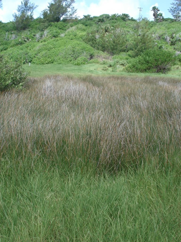 Spittal Pond saltmarsh