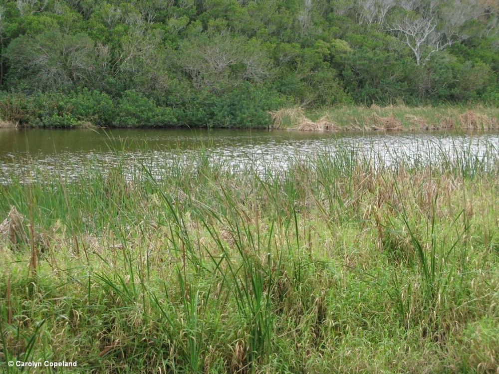 Warwick Pond