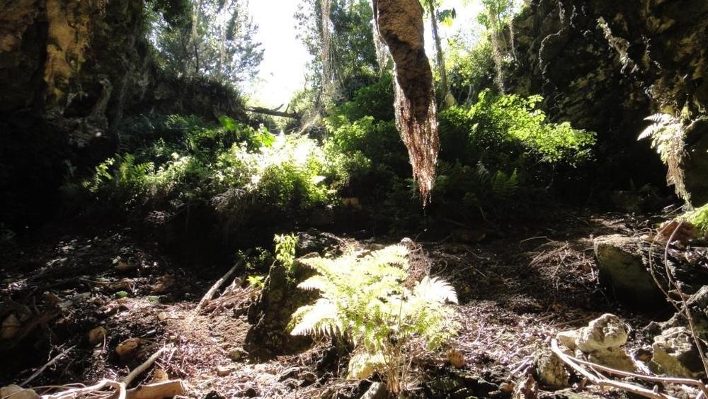 Sear's Cave