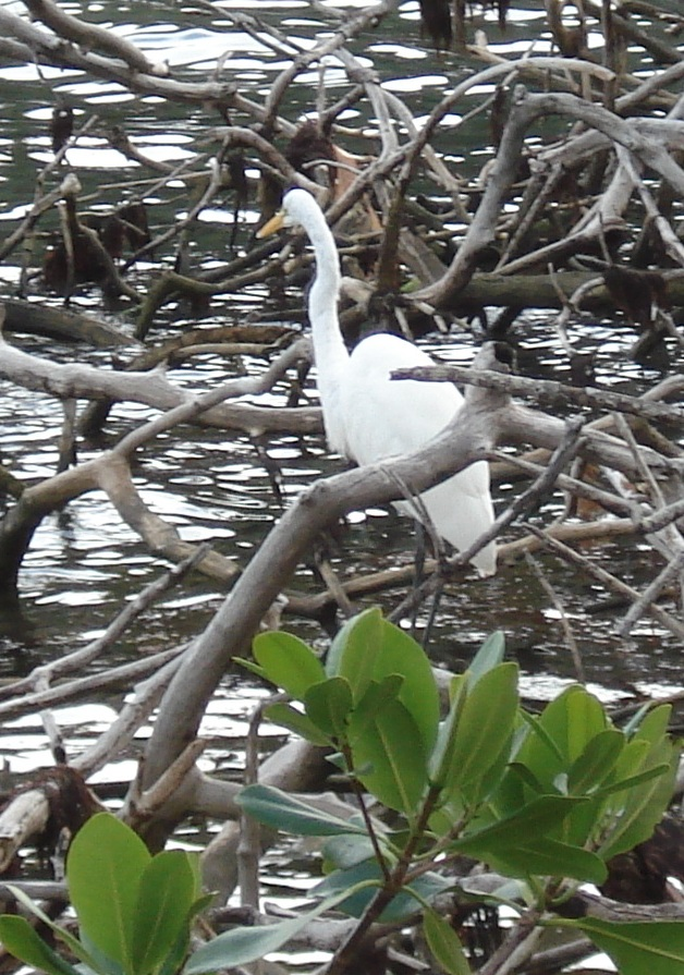 Heron, Blue Hole