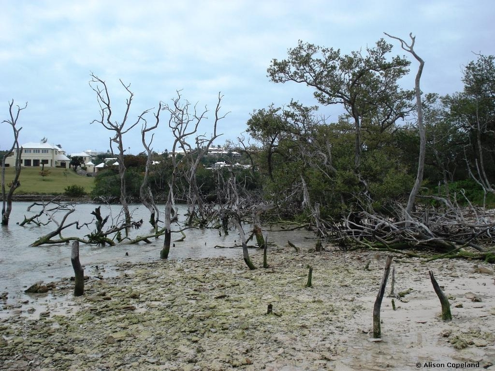 Dead Mangroves, Hungry Bay