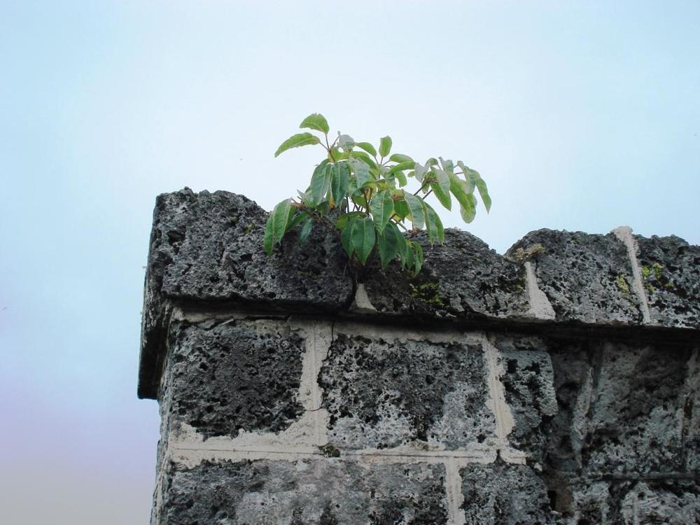 Umbrella Tree in stonework