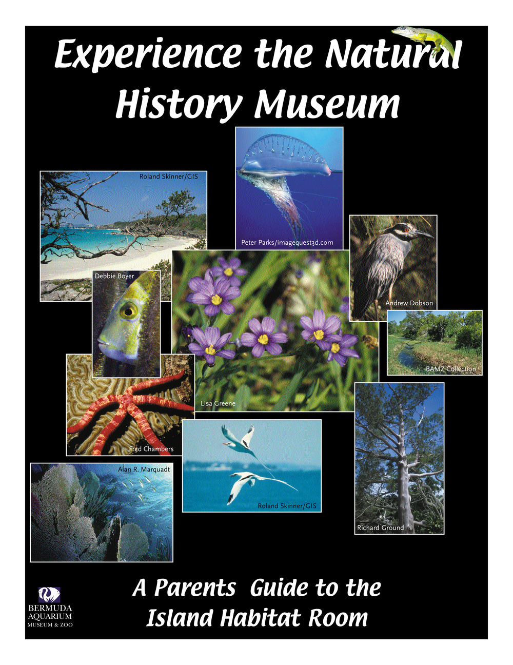 Download the parent's guide to the Island Habitat Room