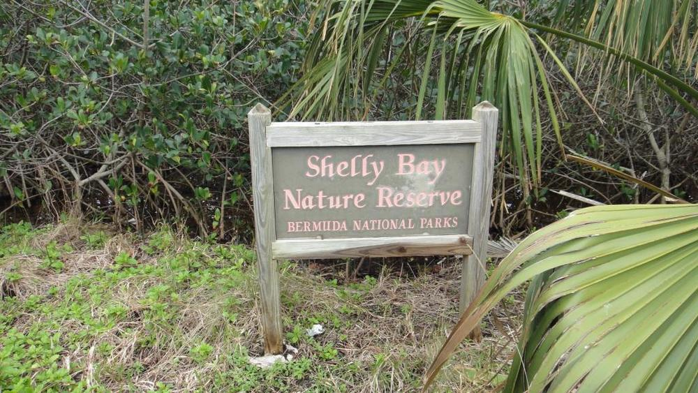 shelly bay sign_c.JPG