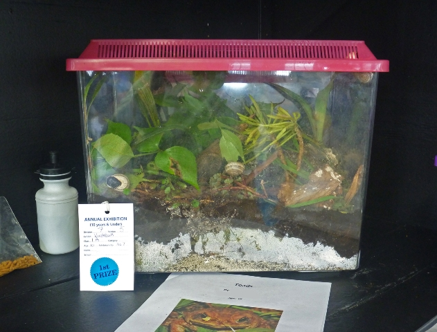 Build A Terrarium The Department Of Environment And Natural Resources