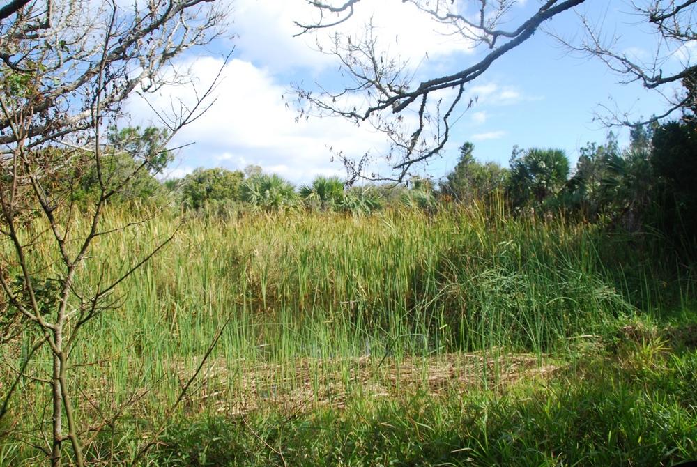 Nonsuch Island Fresh Water Pond_c.jpg