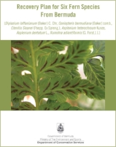 Fern Recovery Plan cover2.jpg