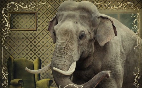 Loving the Elephant in the Room — Jeremy Words