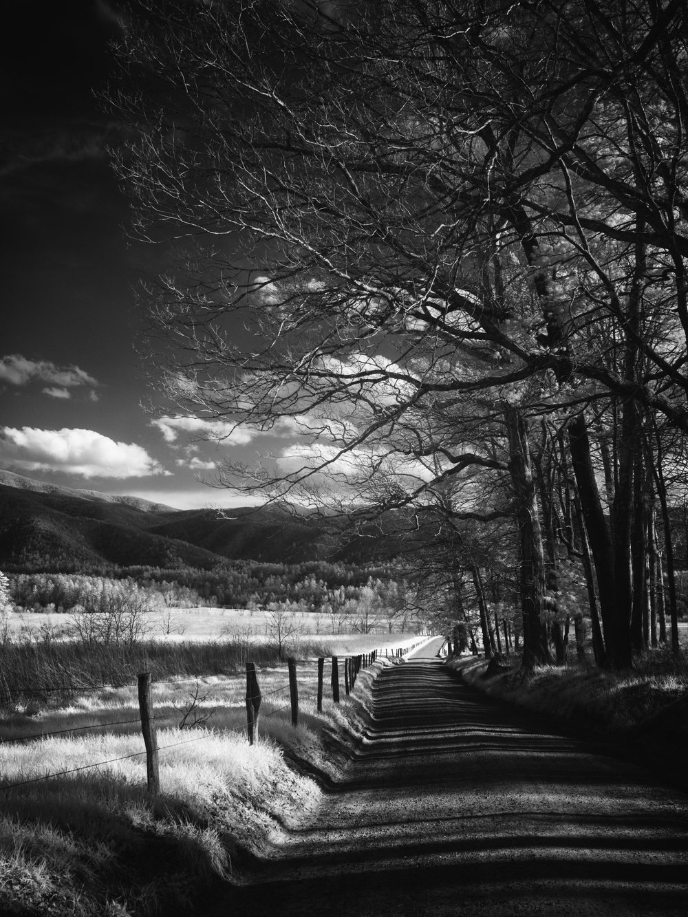 The view along Sparks Lane in Cade's Cove. 30nm converted OM-D E-M1 MkI + mZuiko 12-100mm PRO