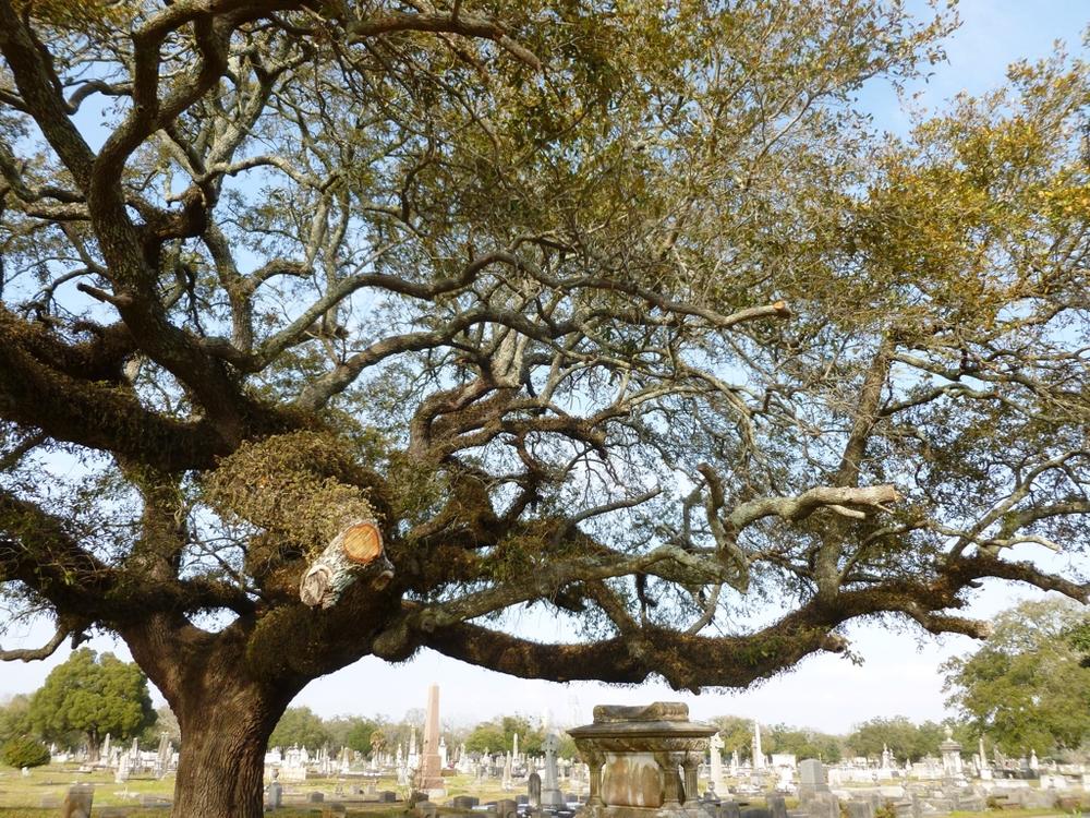 MagnoliaCemetary1.jpg