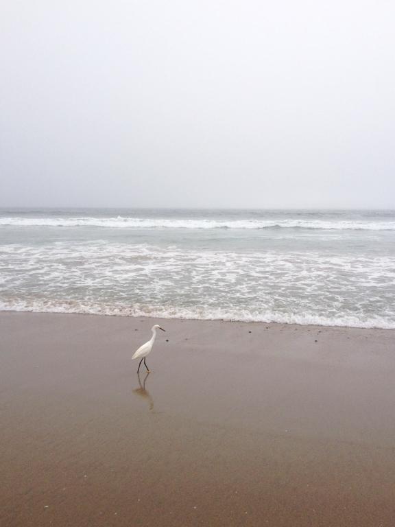 ShoreFog4.jpg