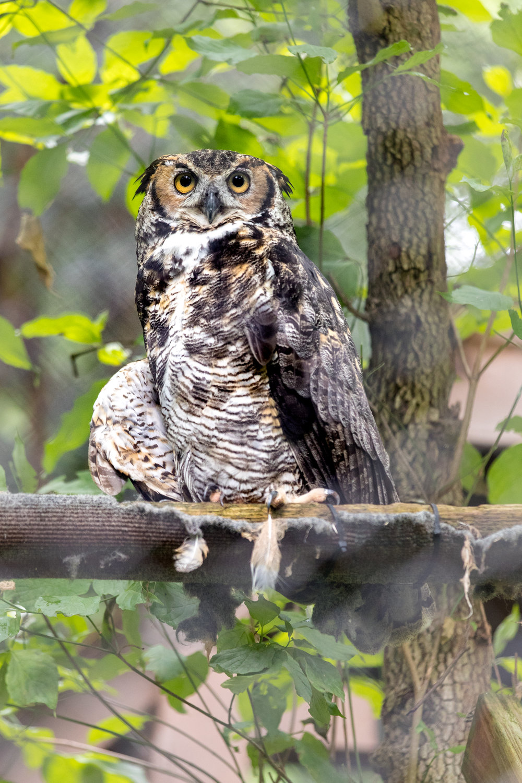 WNC Nature Center_20180707_039.jpg