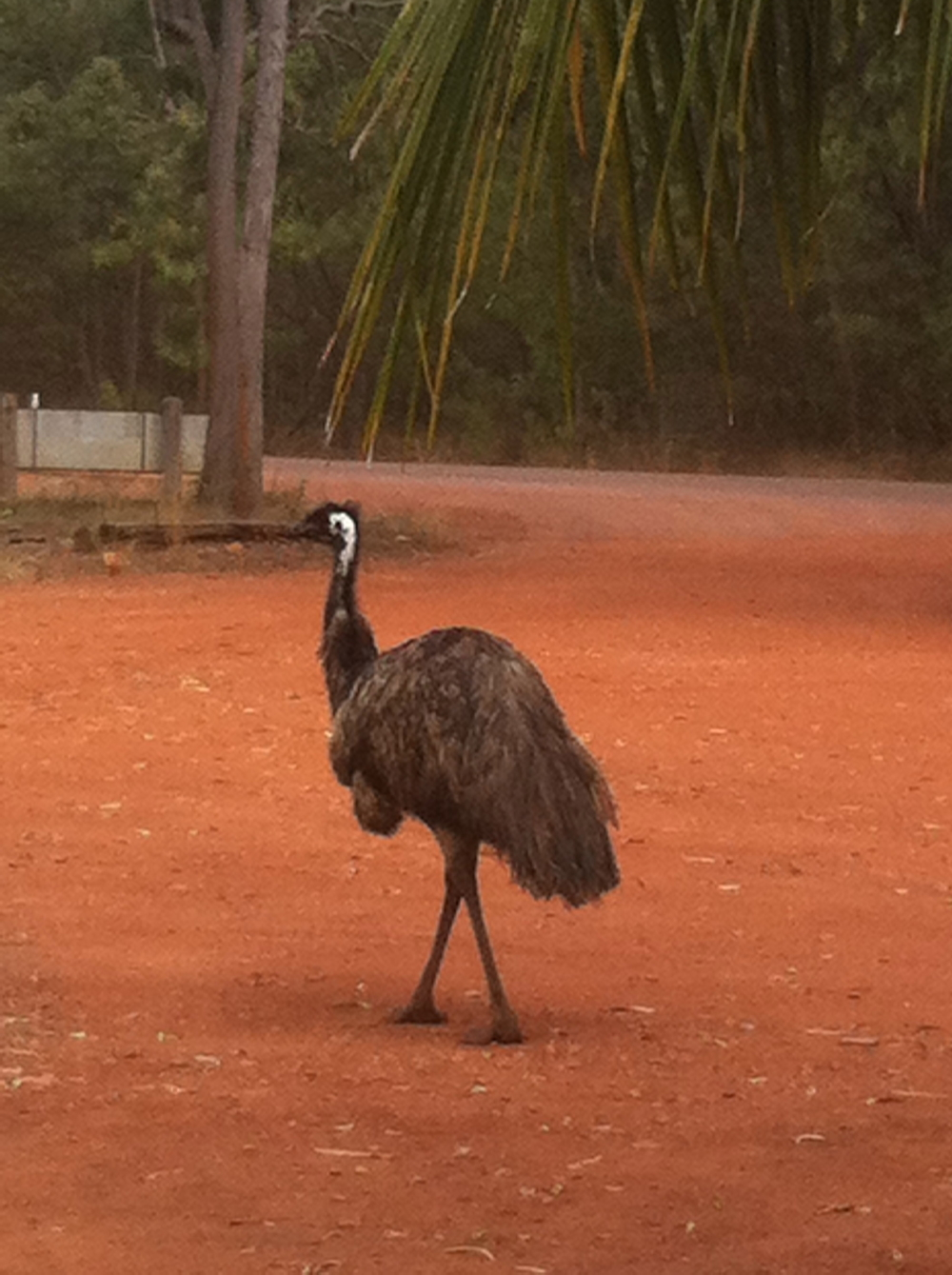 Greeted by Mr. Emu!