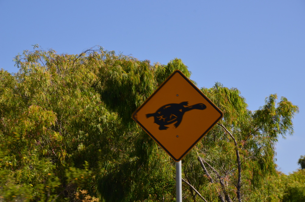 Long-necked turtle crossing!