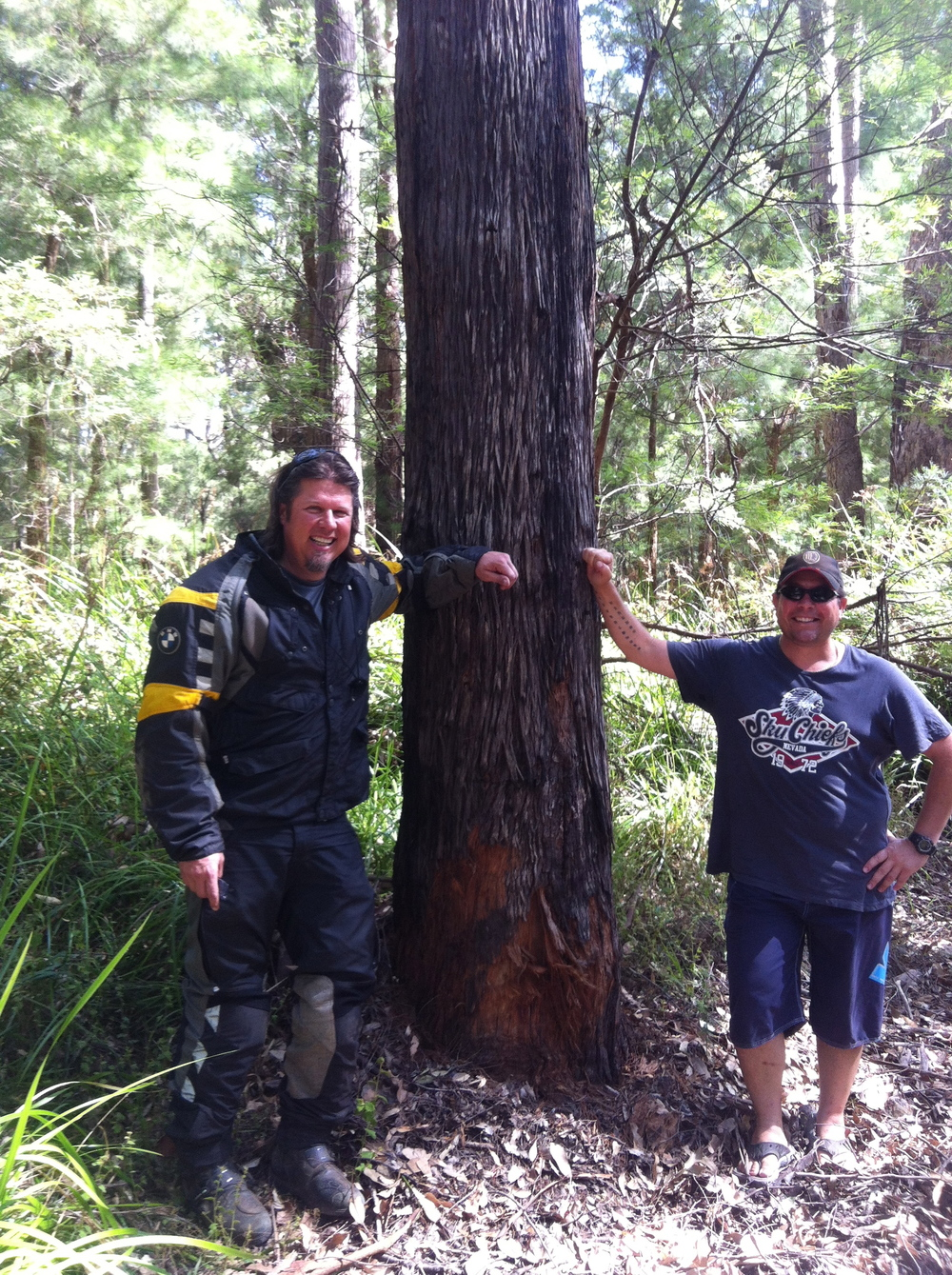 """Hair of the Dog""...Constable Jason, Kev and the Kari tree!  Now we can continue......"