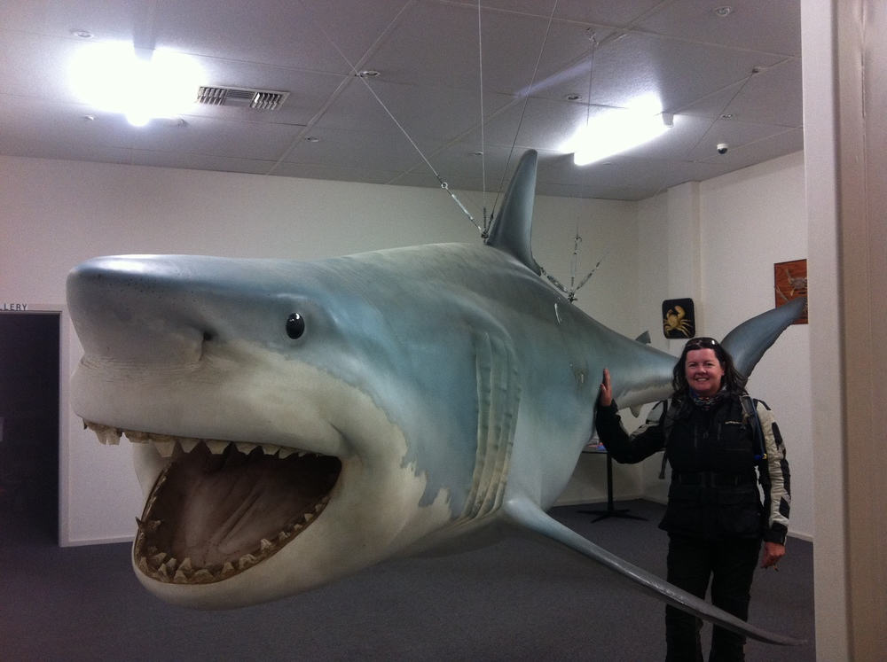 Streaky Bay 's claim to fame...The largest White Pointer Shark catch in the world . More than 5 meters long, weighing in at 1520 kgs, caught on a 24kg line!