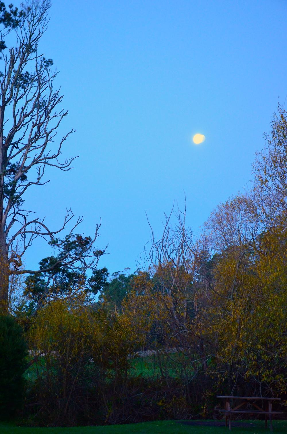 Moon over Mole Creek!