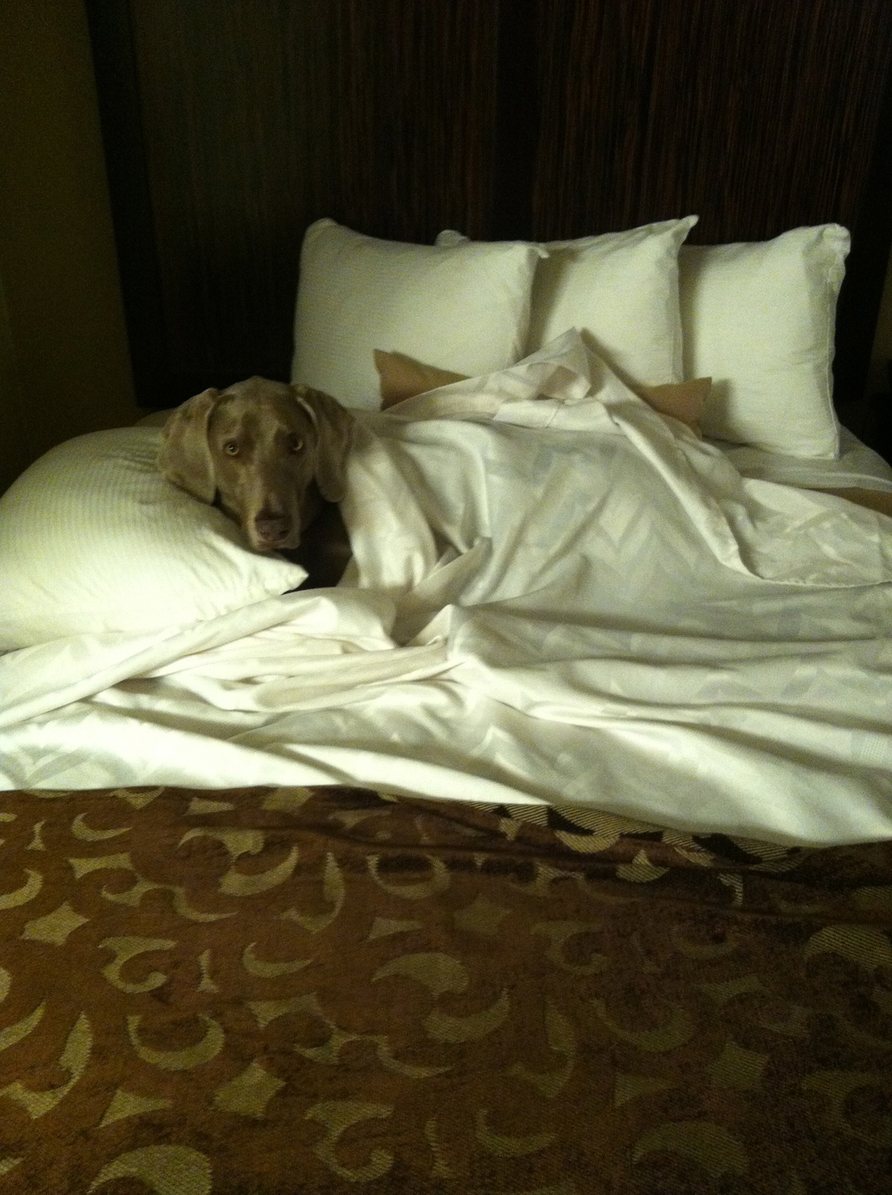 ow that's what I mean…my own bed! The only way to travel!