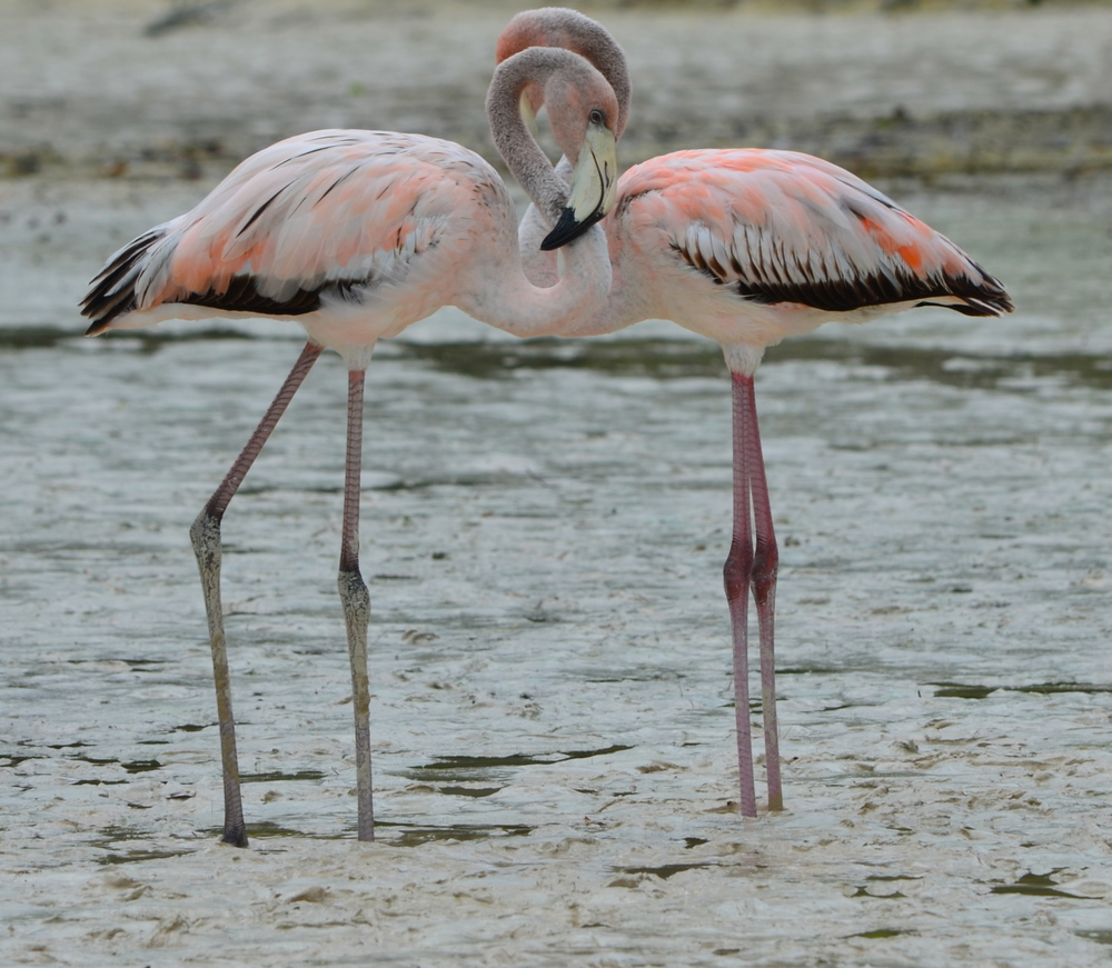 Love this shot of the flamingos! Isn't young love beautiful?!