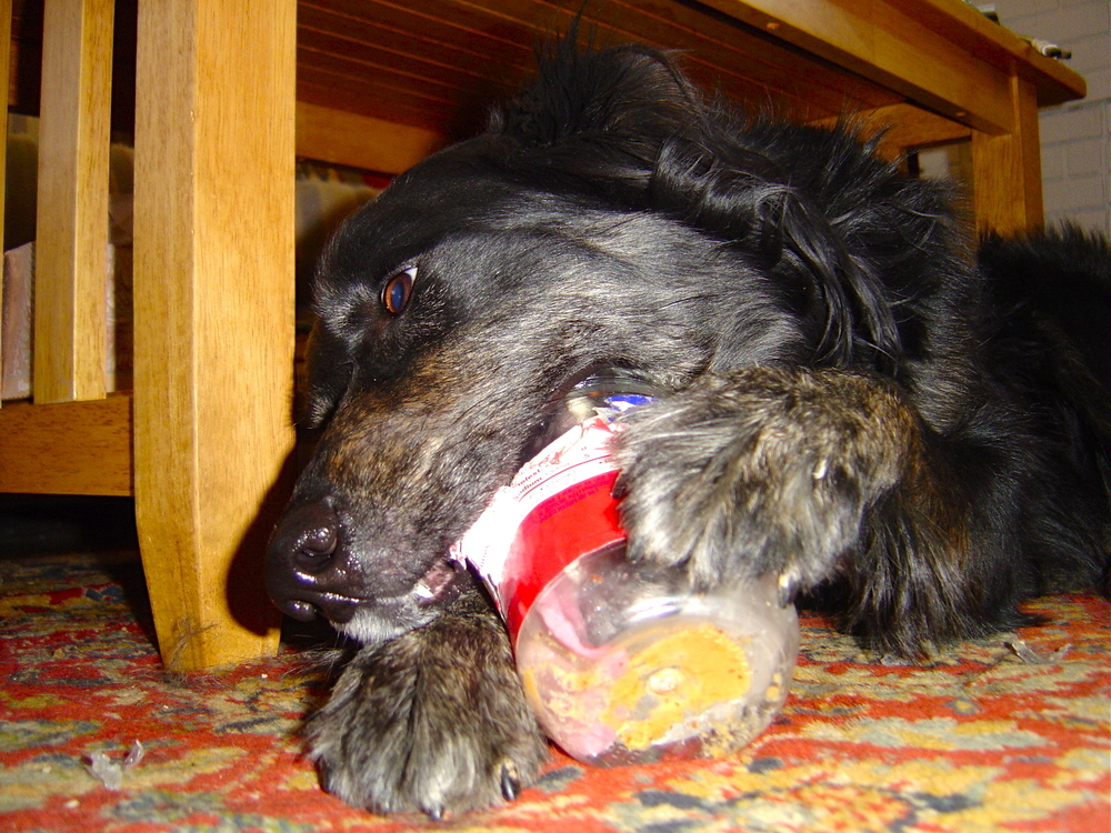 Now this jar was made for a dog's tongue.
