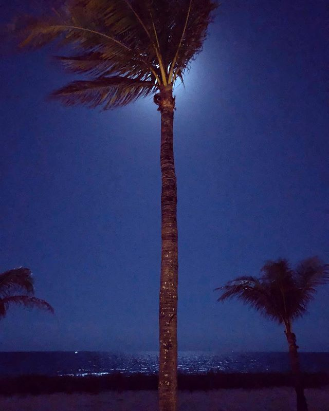 Blue Moon. In order to avoid the usual problems shooting the moon with my phone, I hid it behind the tree. I was pleasantly surprised at the result. #bluemoon #iphonex