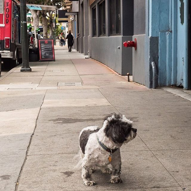 Strolling on our SF Food, Art, and Culture tour-- this little dude spotted after getting our caffeine fix next door  @fourbarrelcoffee