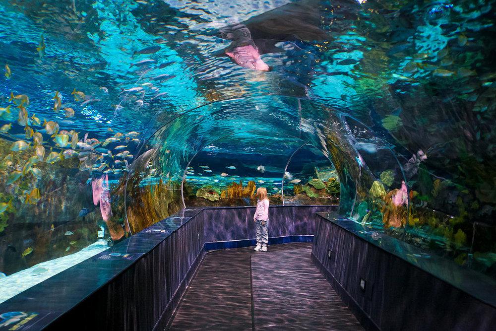 Ripley's Aquarium-1478701251675.jpg