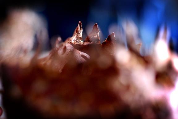 ADOC Clay teeth 20120115_0284_1.jpg