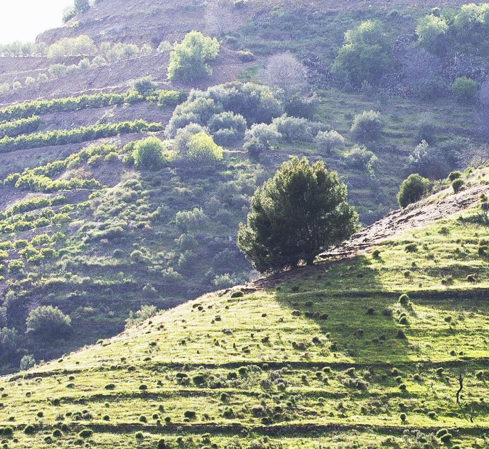 Hillside: Andalucia