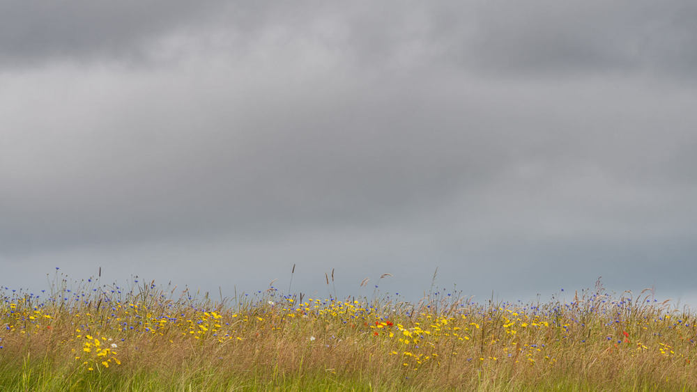contrasting light on this wild meadow