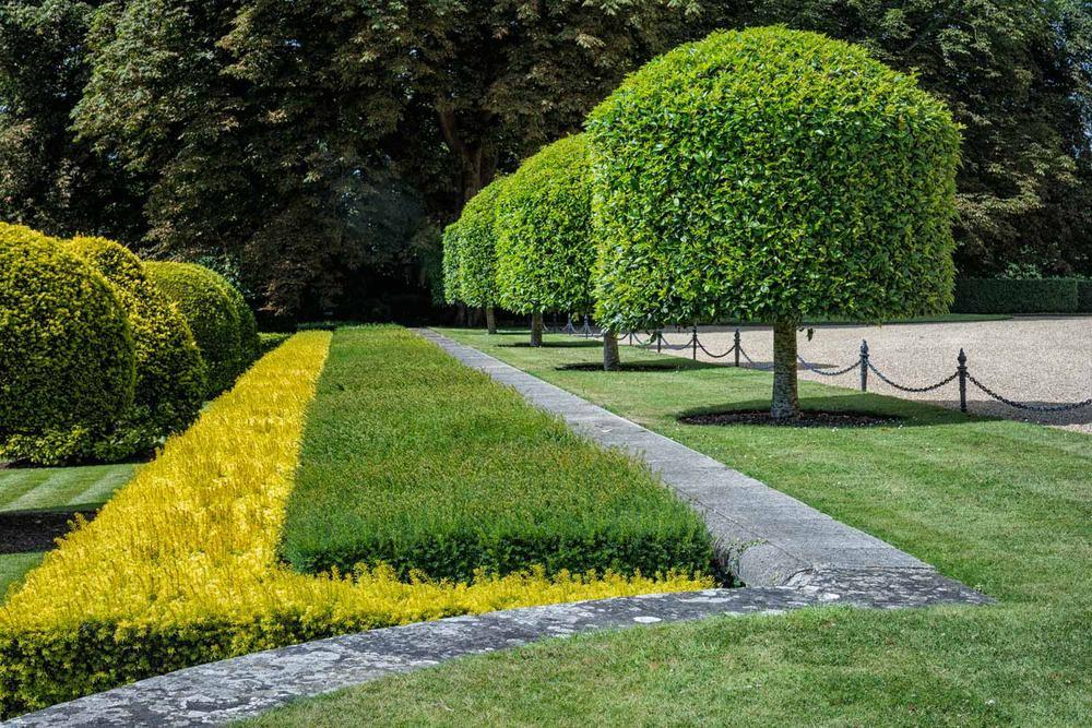 topiary geometry