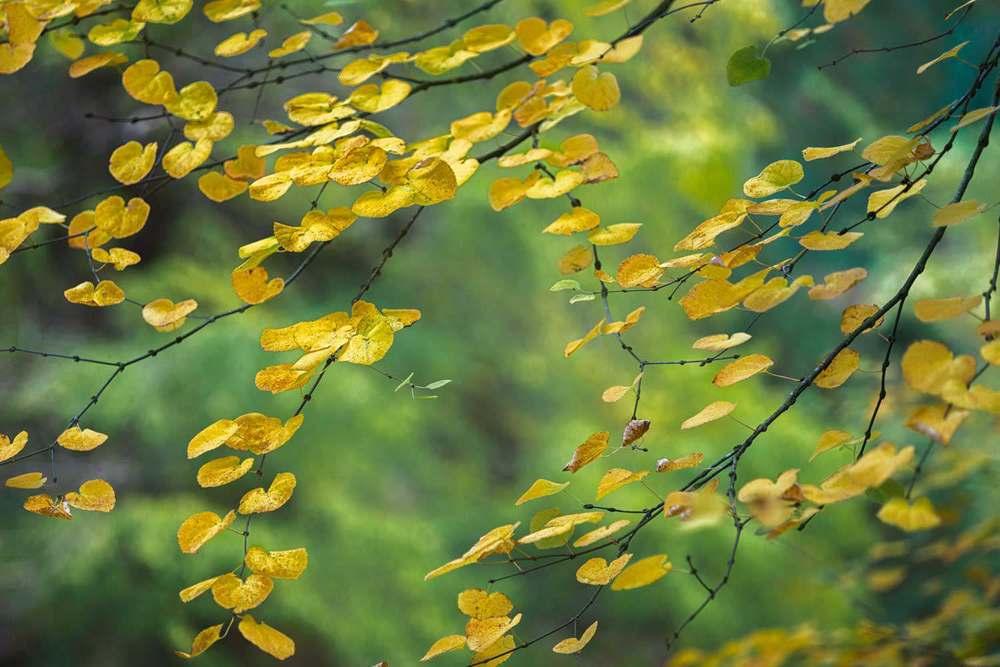 Batsford Autumn 5