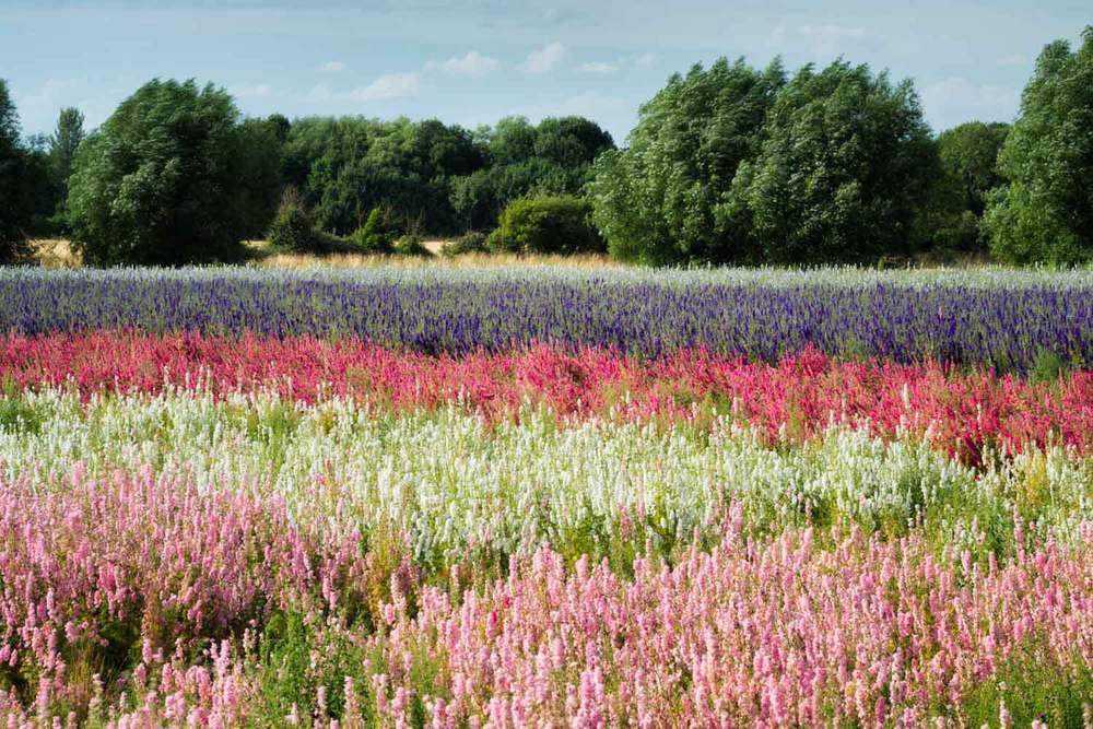 flowering meadow photography workshops
