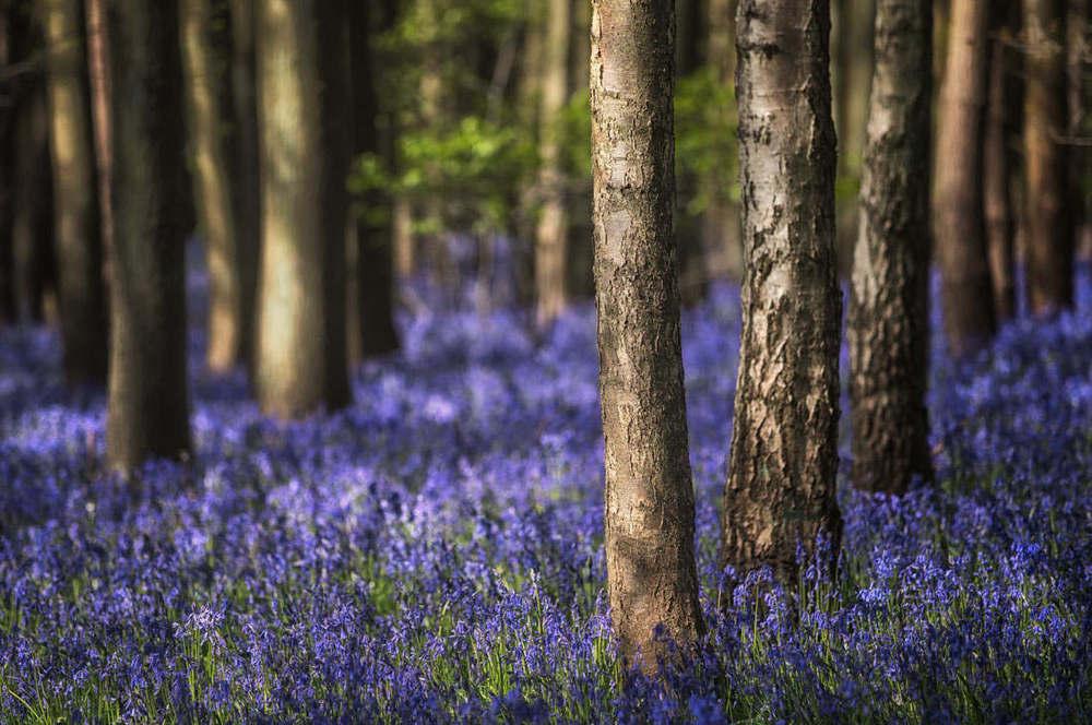 blue season