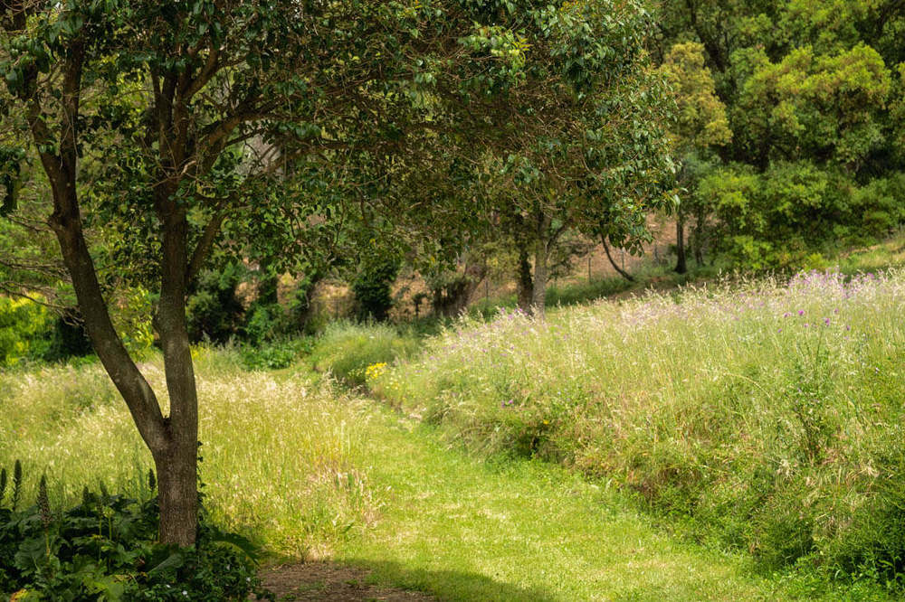 domaine du rayol meadow