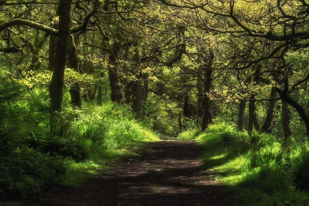 woodland greens