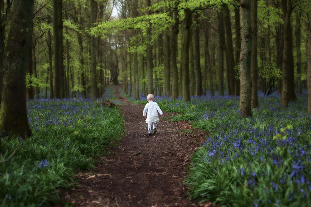 First steps in Bluebell Woods