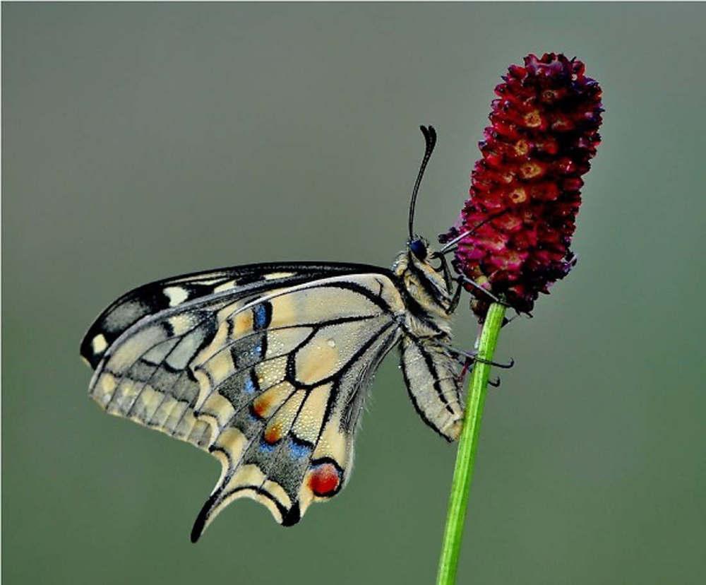 Highly commended - Ruurd Visser - butterfly summer