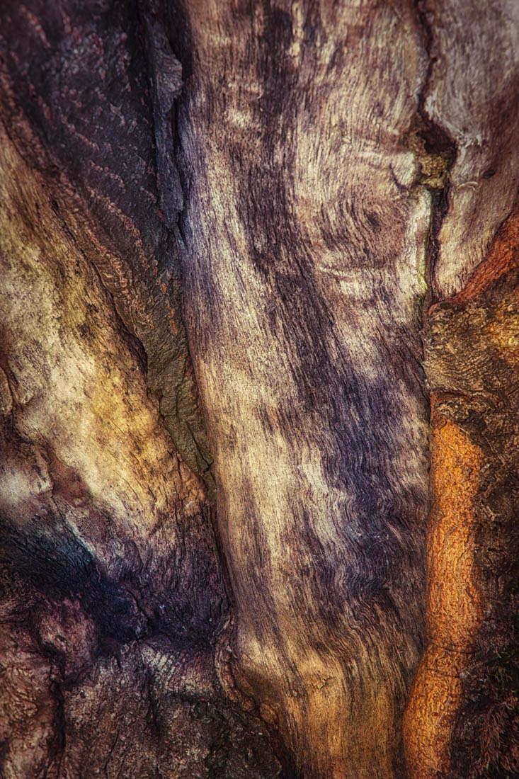 bark study 16