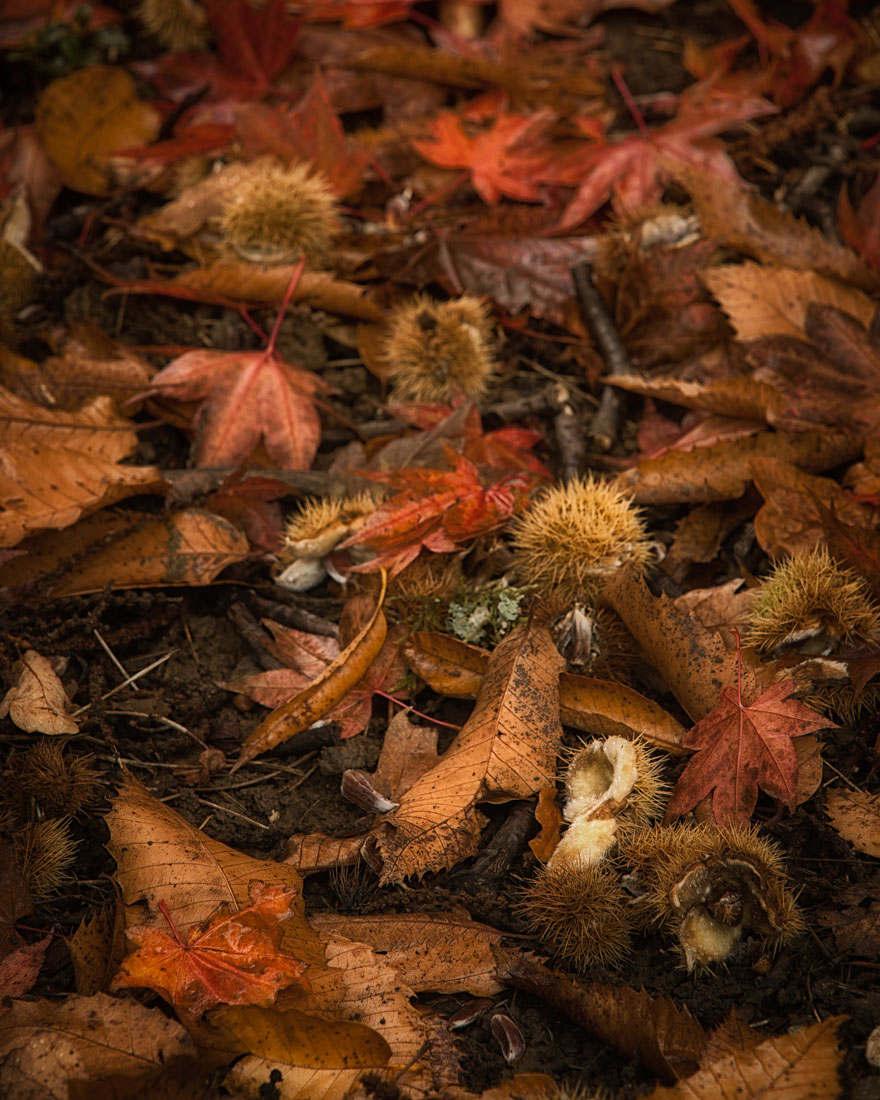 autumn litter