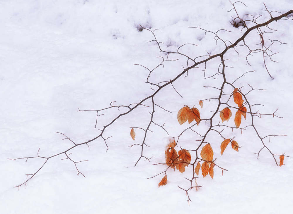 Snow and beach leaves