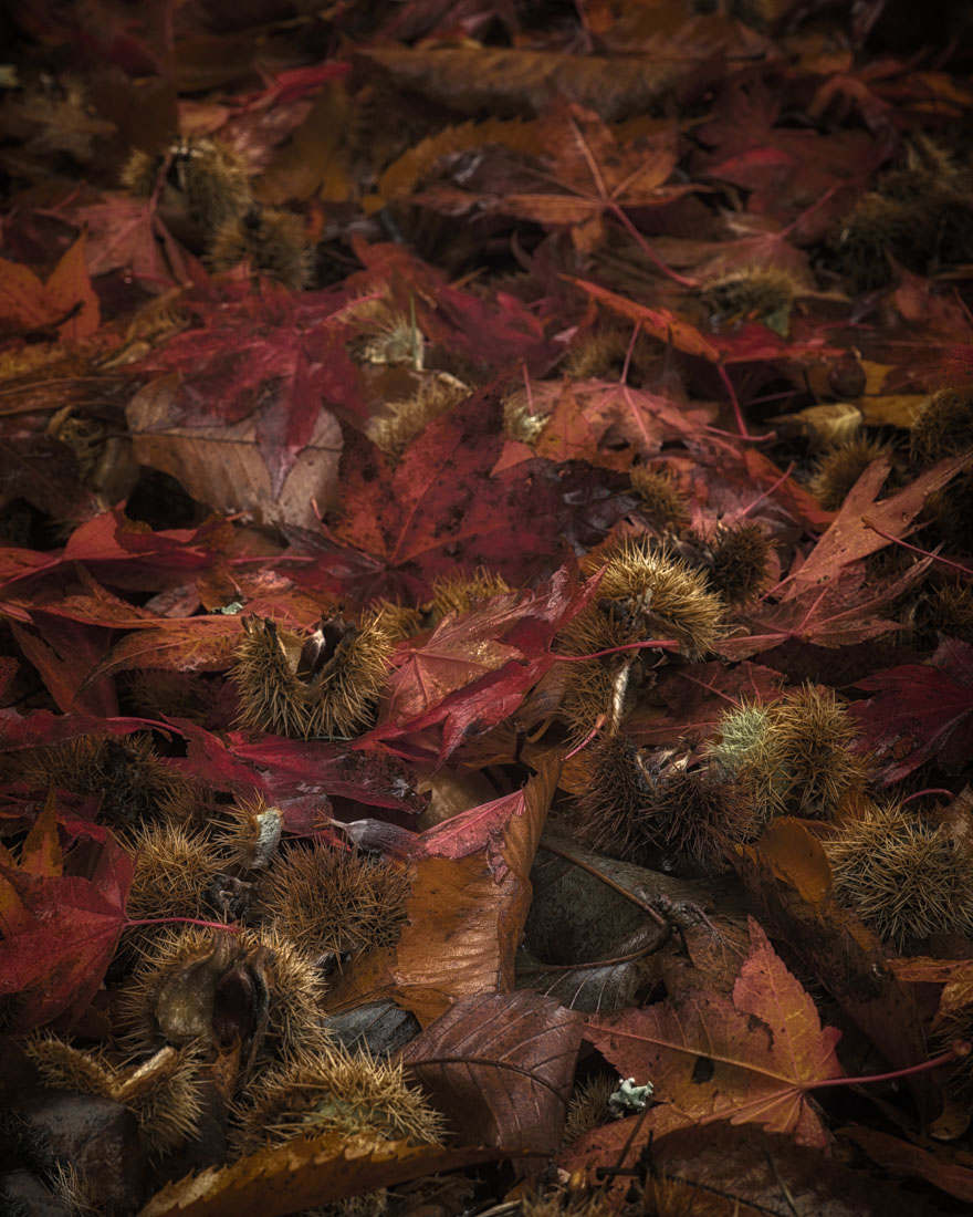 Autumn Litter - Nov 2015