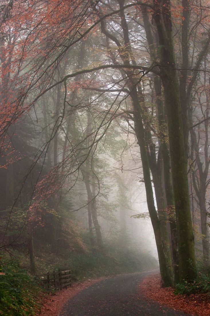 Vyrnwy Fog - Nov 2015