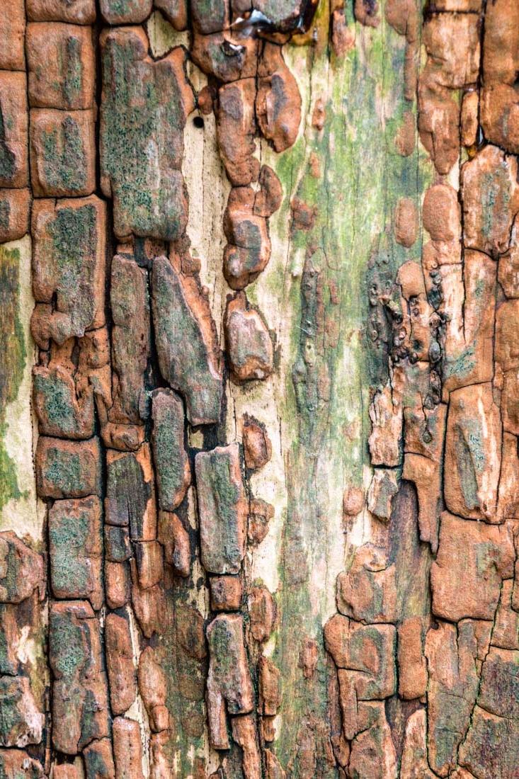 bark wall
