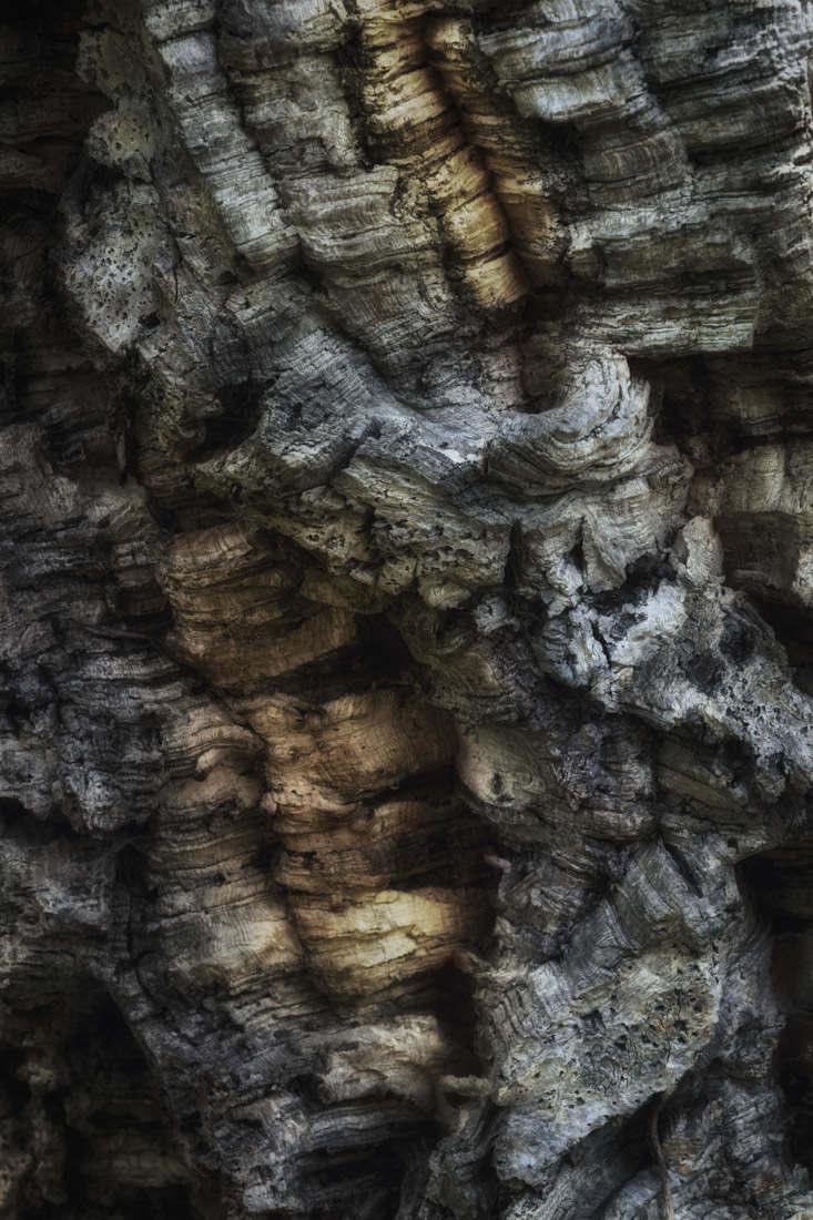 Bark Study 27